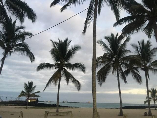 palm trees isabela