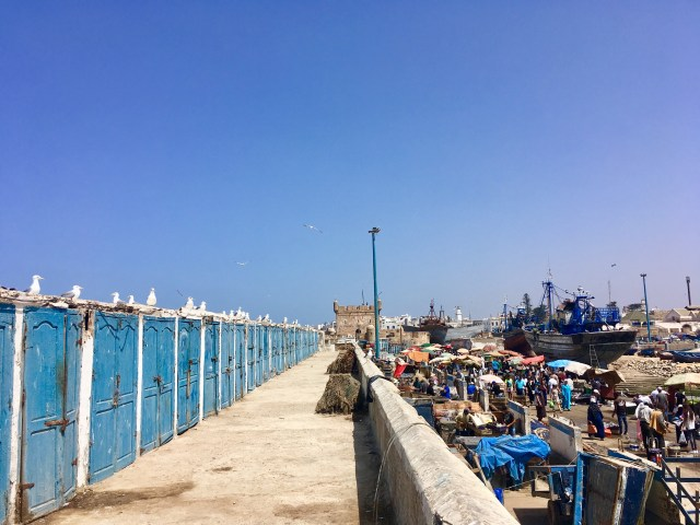 essaouira fish market morocco