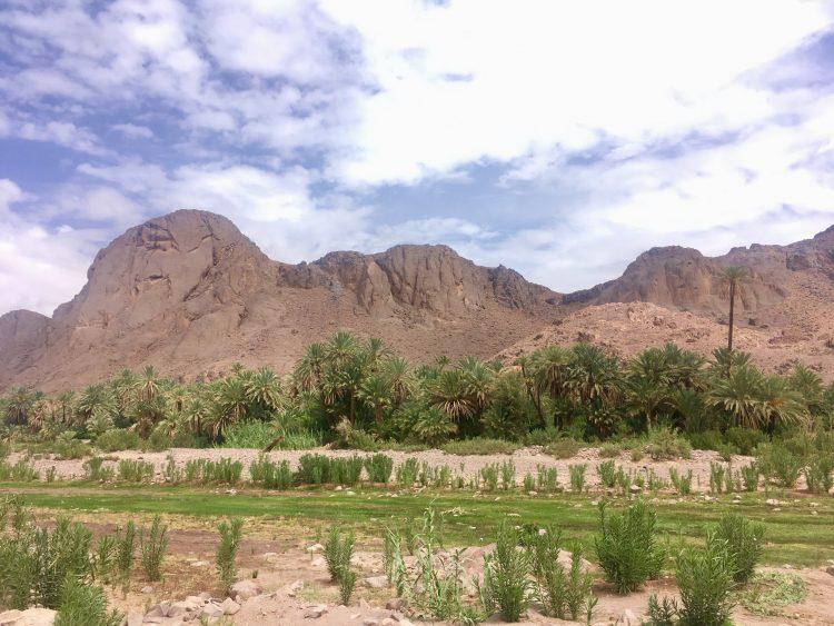 fint oasis