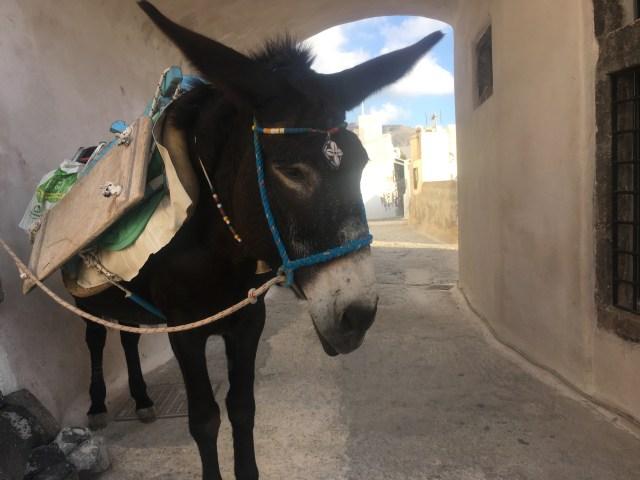 Pyrgos Kallistis donkey