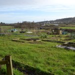 Amateur Allotment Growers