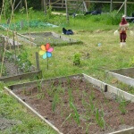 Grow your Own Healthy Food with Rocket Gardens