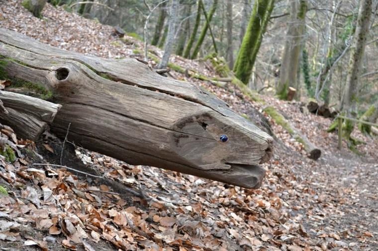 Childrens-Nature-Trail