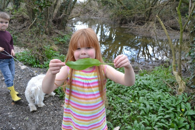 foraging-wild-garlic