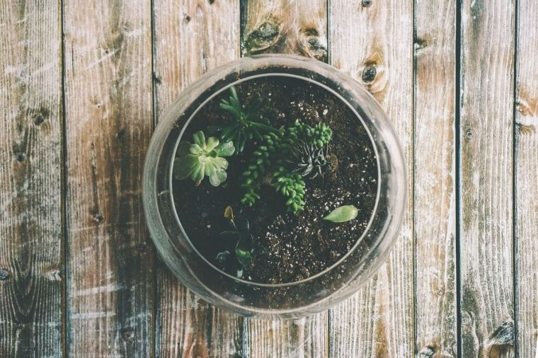 Terrariums for home decor ideas