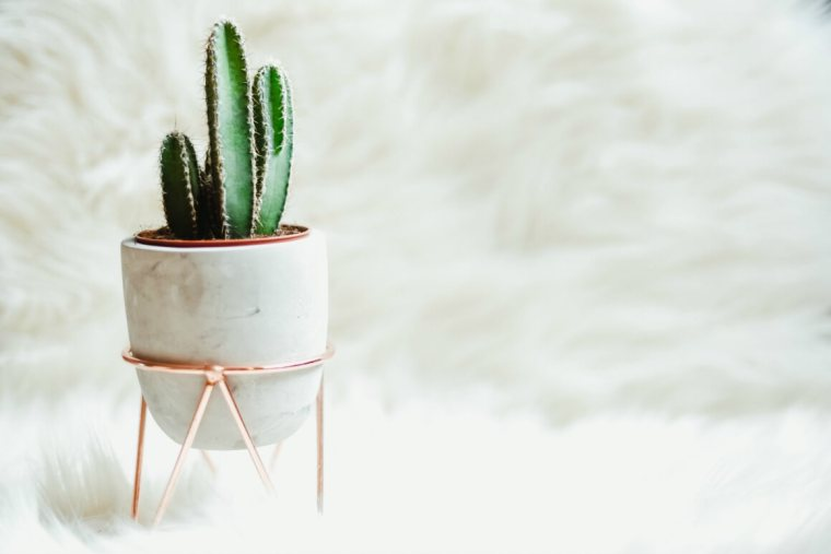 Houseplants for clean air at home