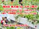 第8回 東大阪 de イチゴ狩り 開催決定!