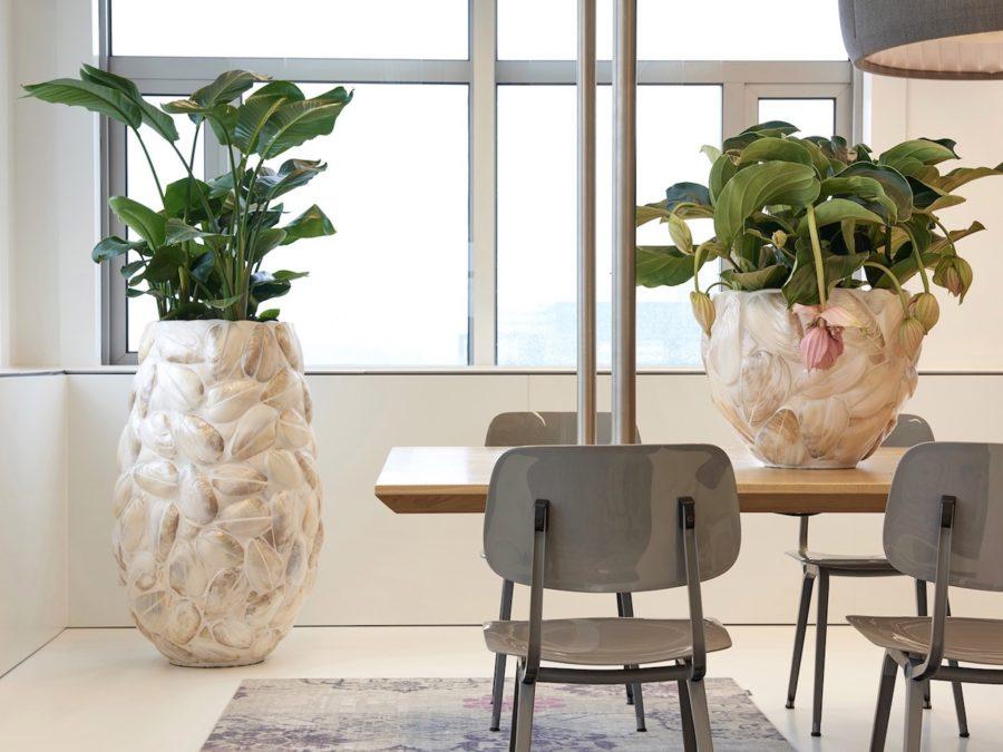 Pflanzgefäß aus Muscheln, Haas Innengrün