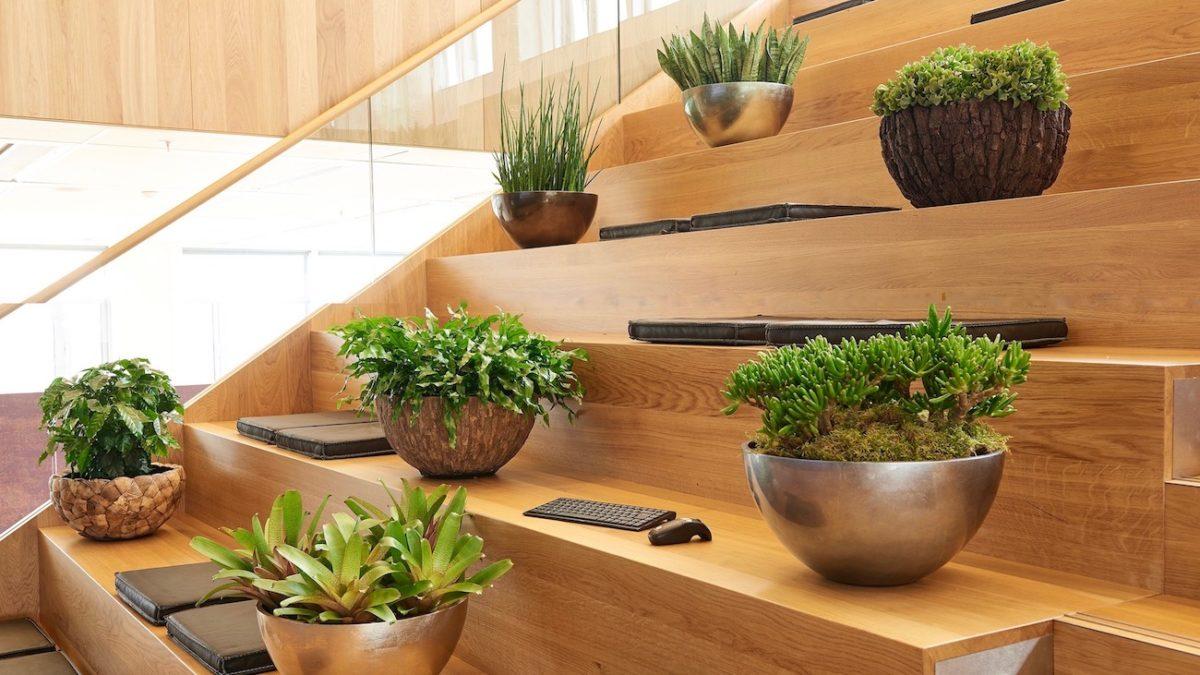 Tischgefäße auf Treppe, Haas Innengrün