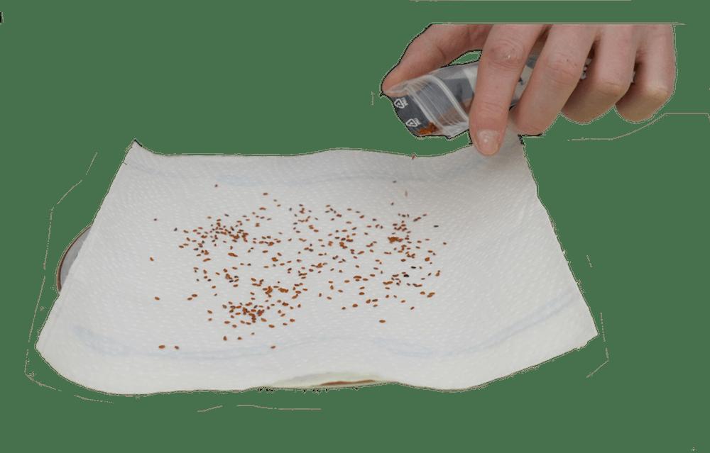 Kresse anbauen Kresse pflanzen - Haas Innegrün