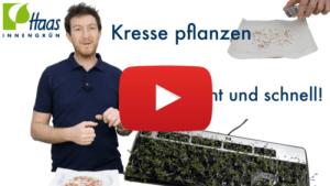 Kresse anpflanzen Kresse pflanzen - Haas Innengrün