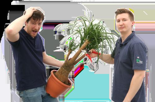 Pflanzen, Zimmerpflanzen, Blumen schneiden, Haas Innengrün