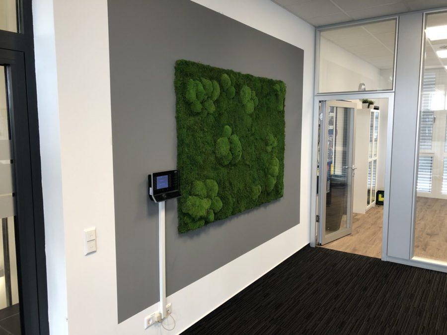 Mooswand, Moosbild im Eingangsbereich - Haas Innengrün