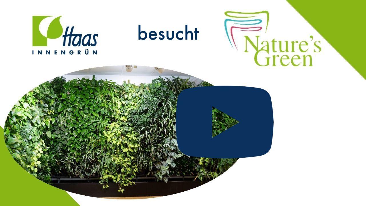 Natures Green unser Lieferant - Haas Innengrün