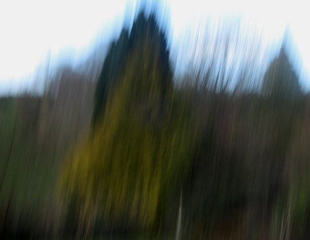 Blur does not have to be the bane of tree photography! It can be useful, and can be used to add mood