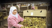 Tütün üreticileri ile ihracatçıları işbirliği yapacak