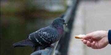 Güvercin besleyen yaşlı kadın 4 bin 400 euro ödeyecek