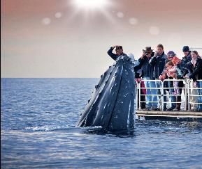 Queensland Tourism getting up close and personal with Humpback Whales