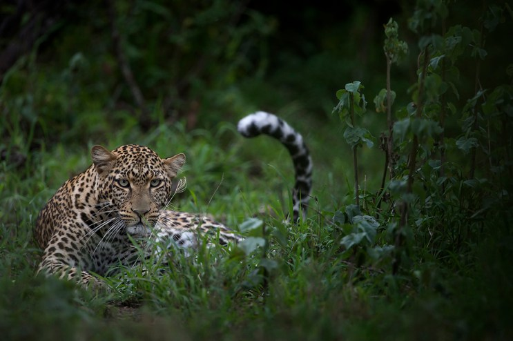 Singita-Serengeti-House-Wildlife6