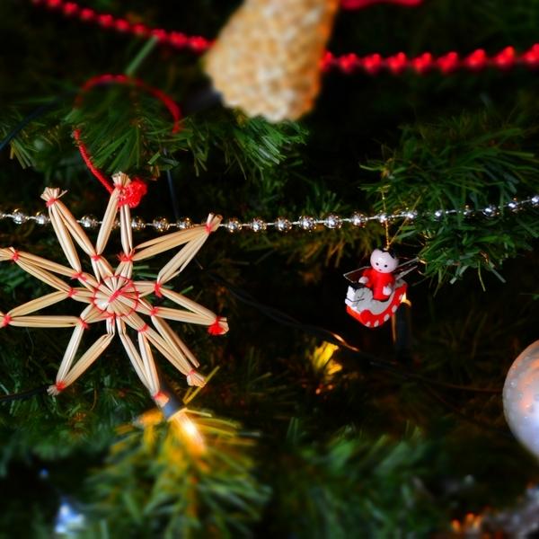 Comment Bien Choisir Son Sapin De Noël