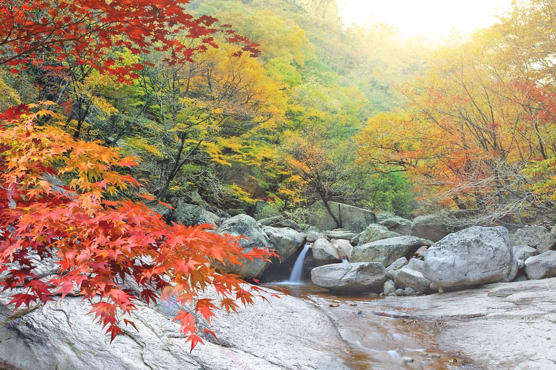 Korea Fall Season Tour