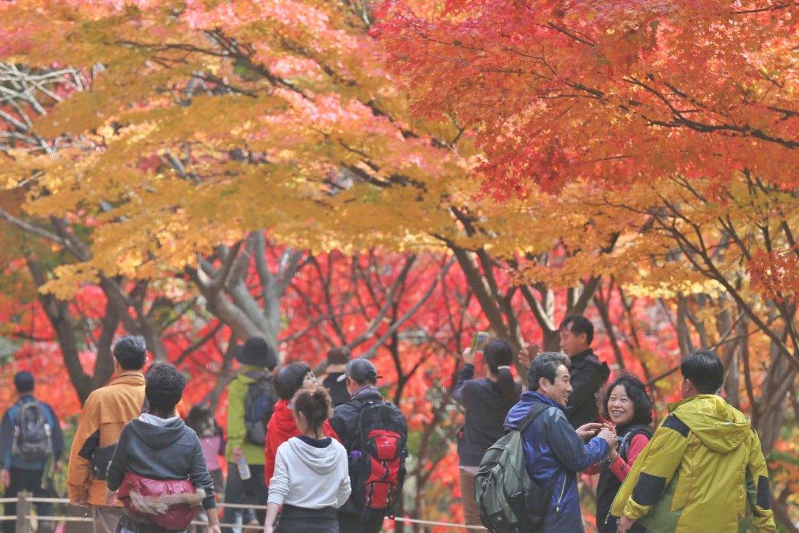 Korea Fall Season Tour - ODAESAN NATIONAL PARK