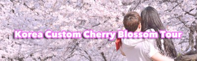 Korea Cherry blossom blooming forecast in 2018