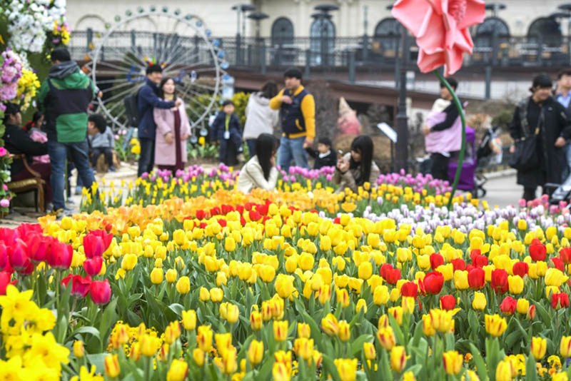Everland will hold the 'Tulip Festival' for 44 days from March 16