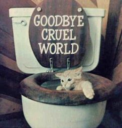 Cat_Toilet1