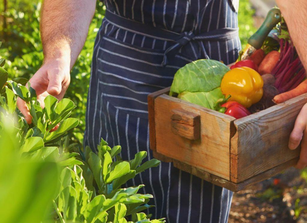 От фермата до тезгяха: как да зареждате вашия ресторант с местни продукти