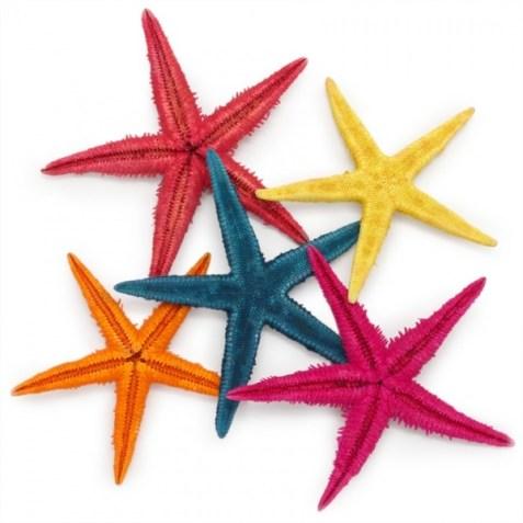 Estrellas de mar para decorar