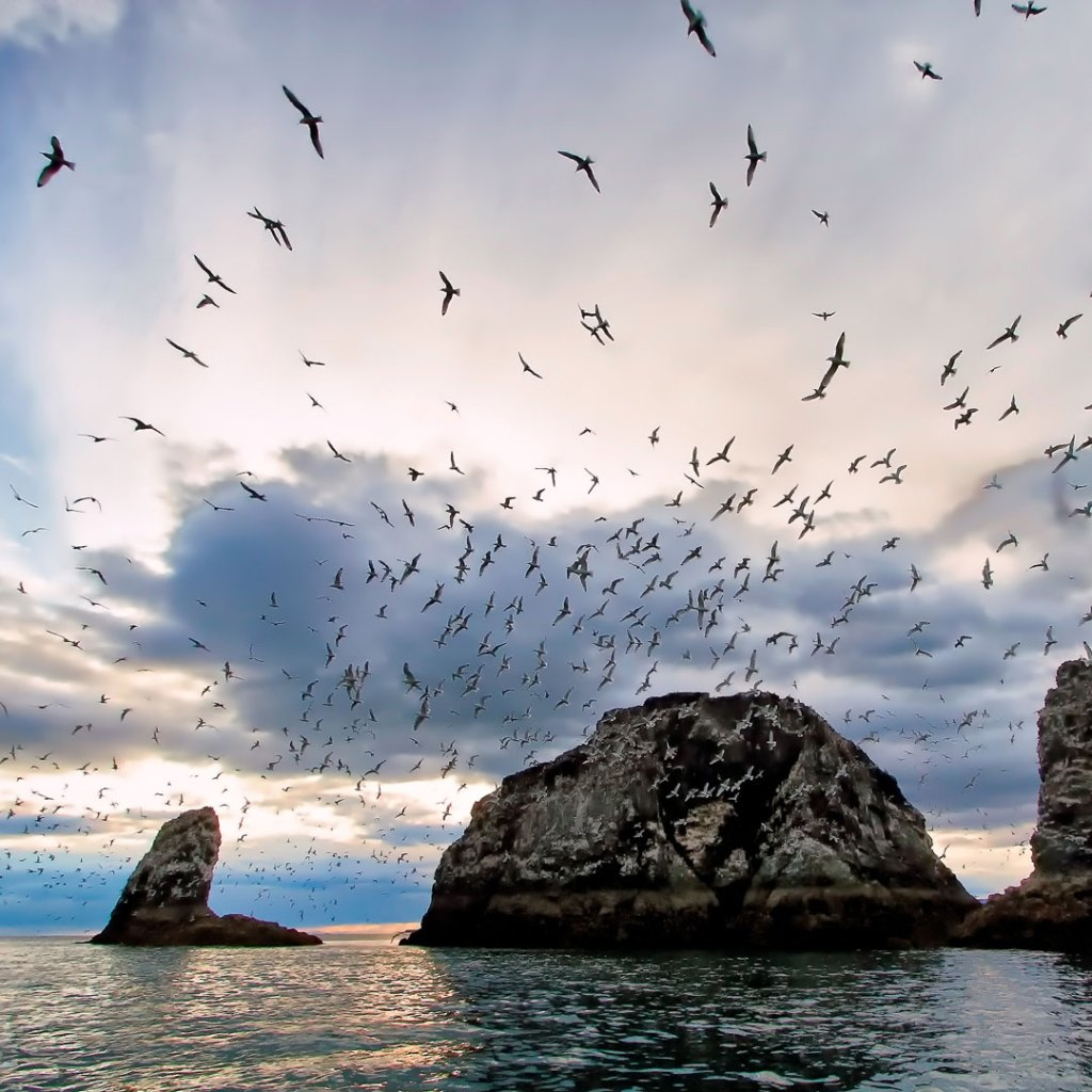 giant rock formations in the bay with seagulls flying over them