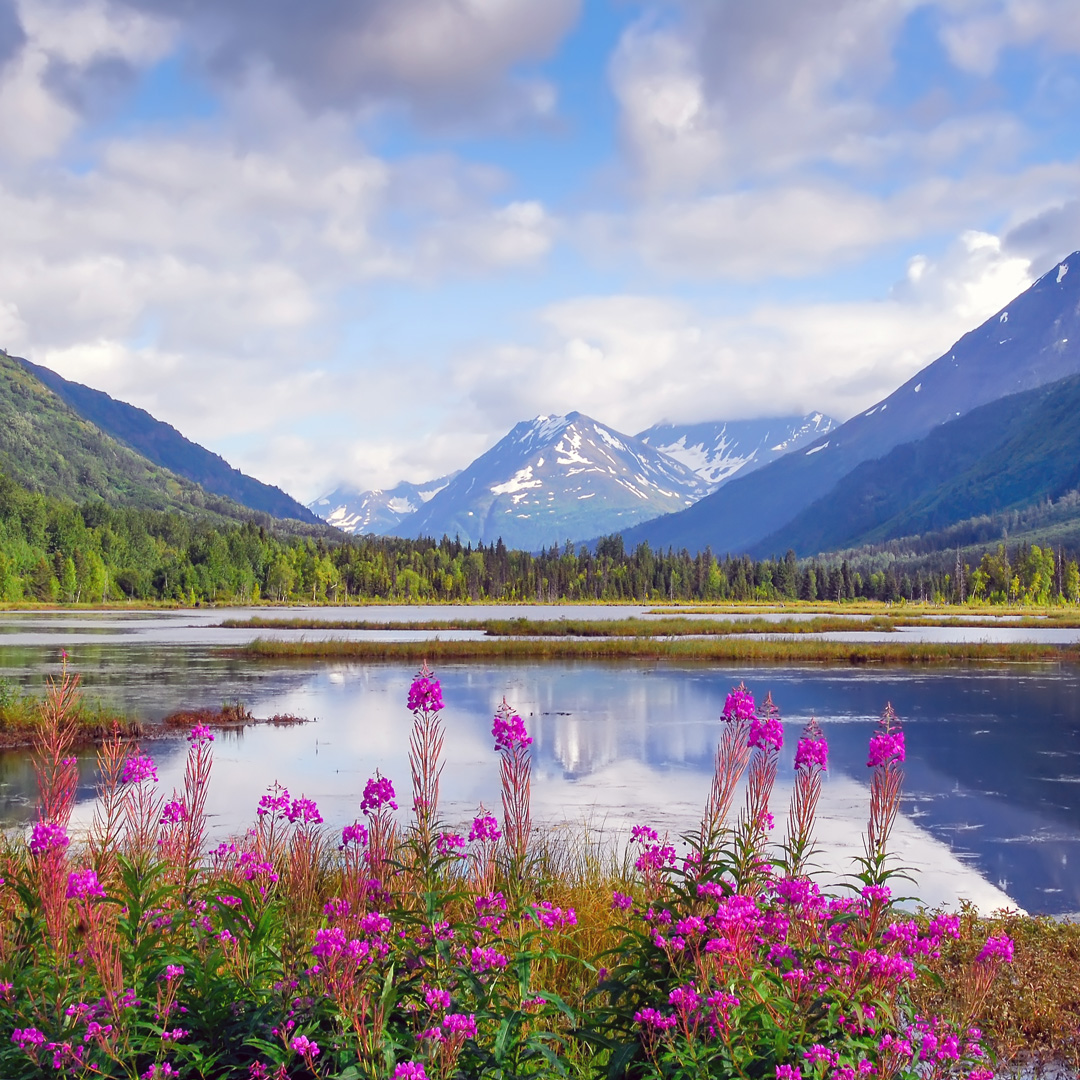 wildlfowers near the lake and mountains in Alaska