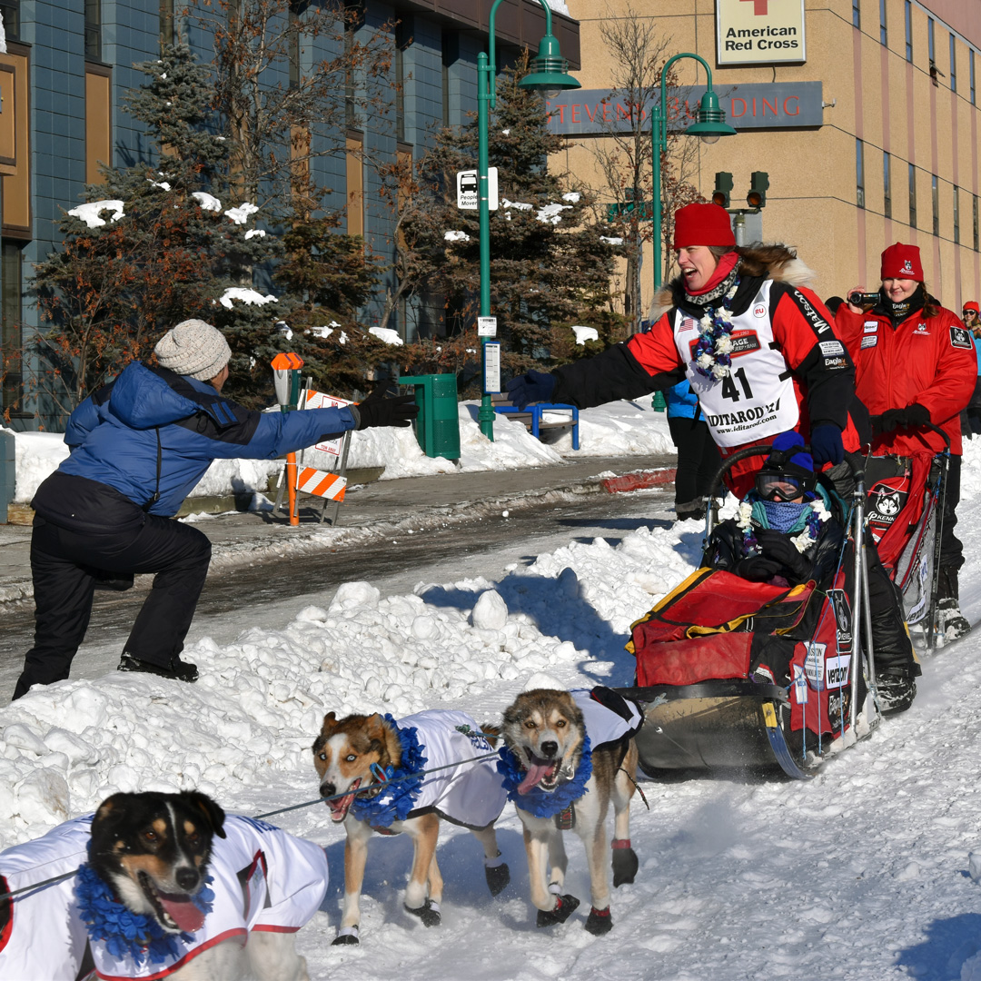 dogs pulling a sled in the Iditarod