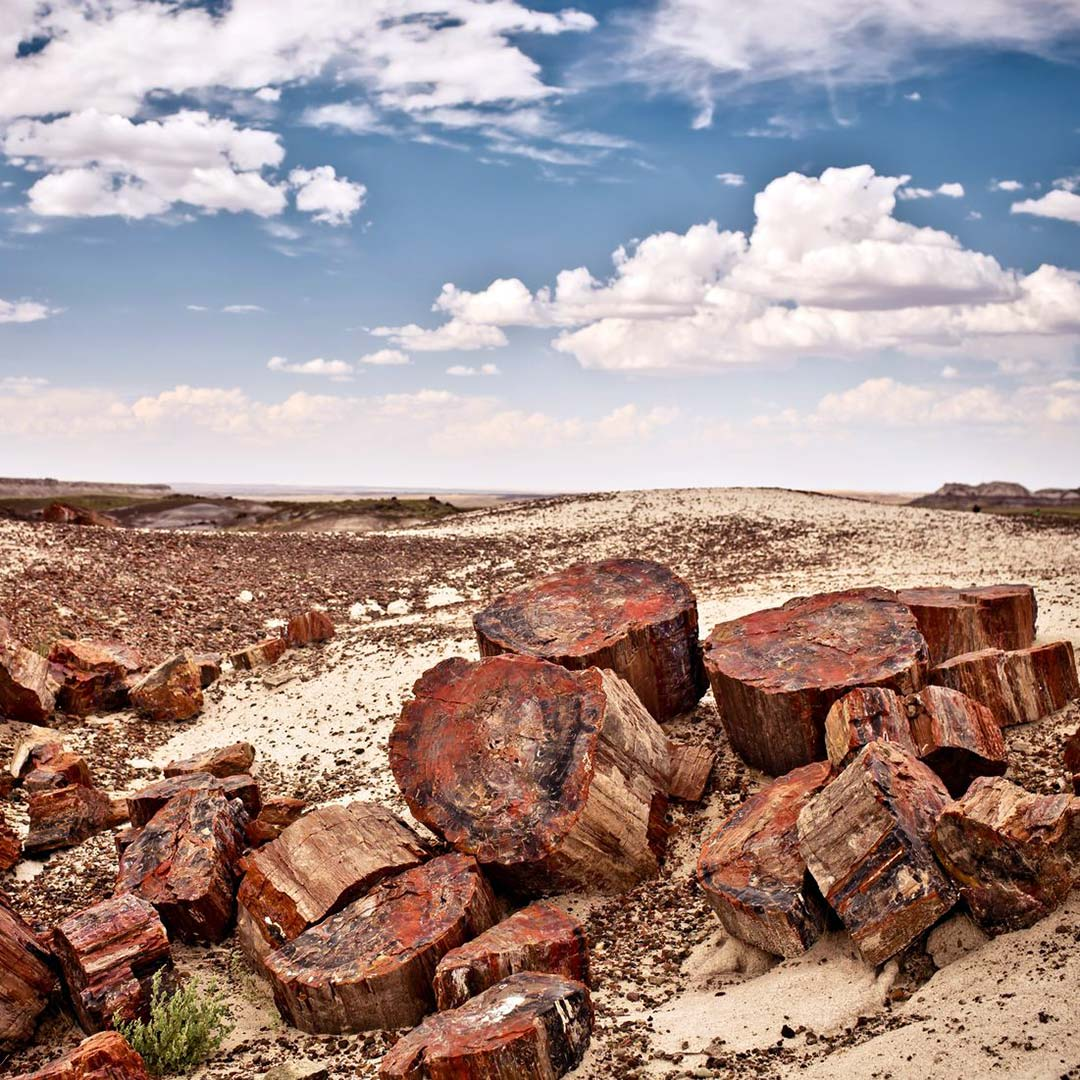 Petrified logs in Arizona's Petrified Forest National Park.