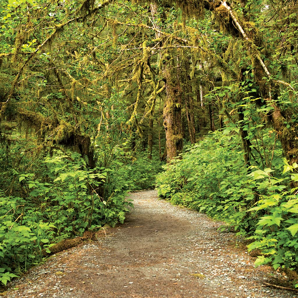 A path through the lush green woods in the rainforest of Tongass National Forest
