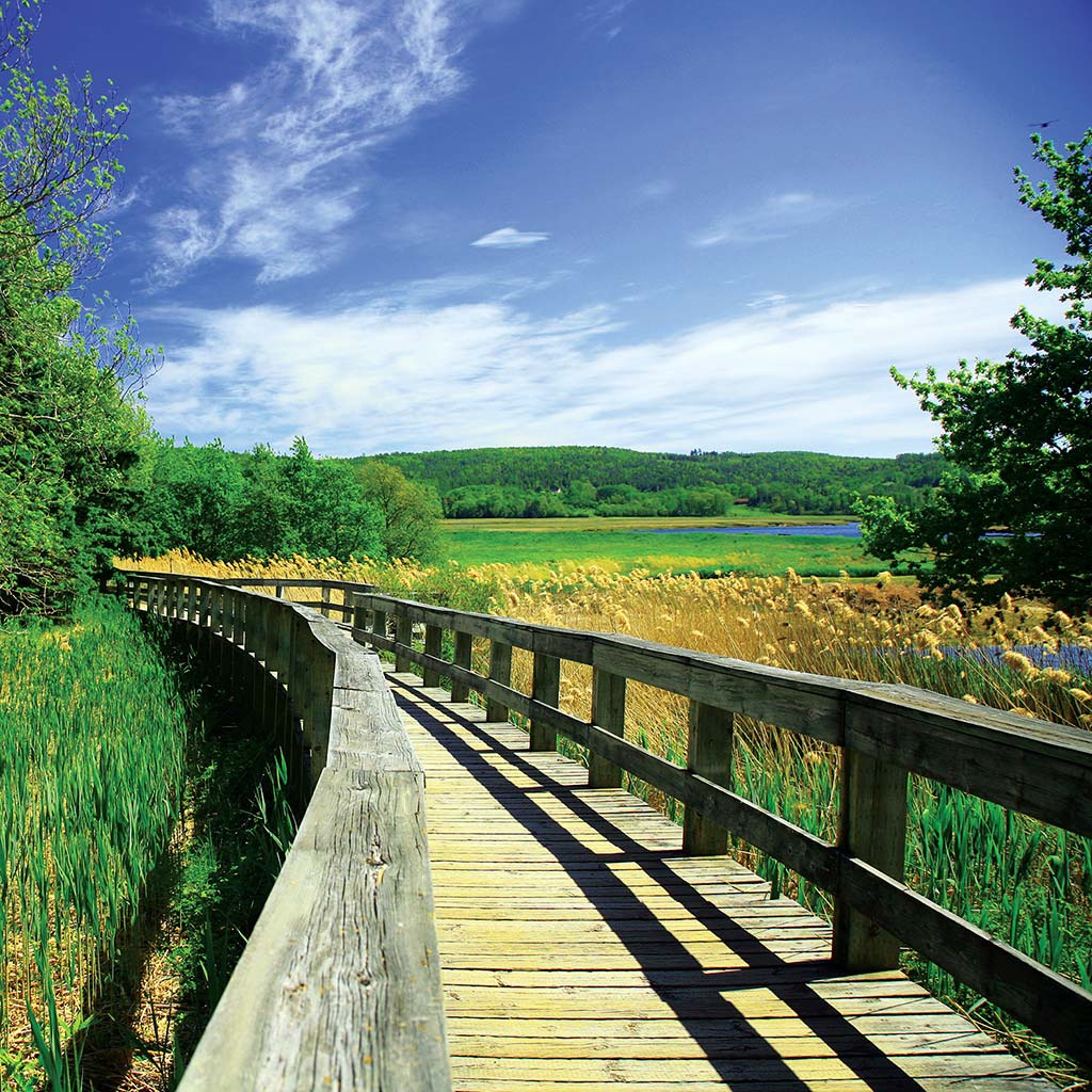 A wooden path through grasses in the historic gardens of Annapolis Royal.