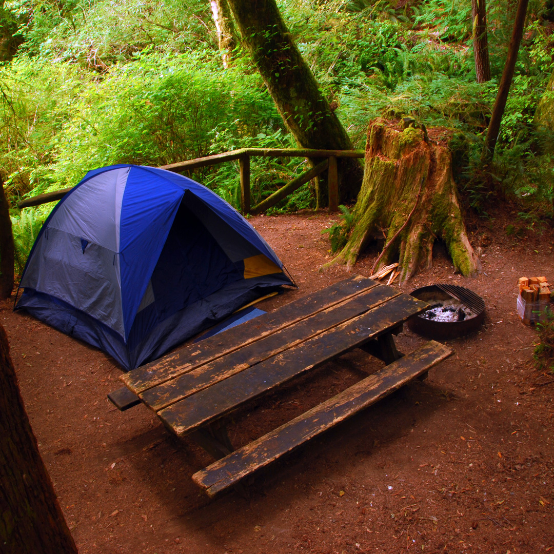 campground in Redwood National Park