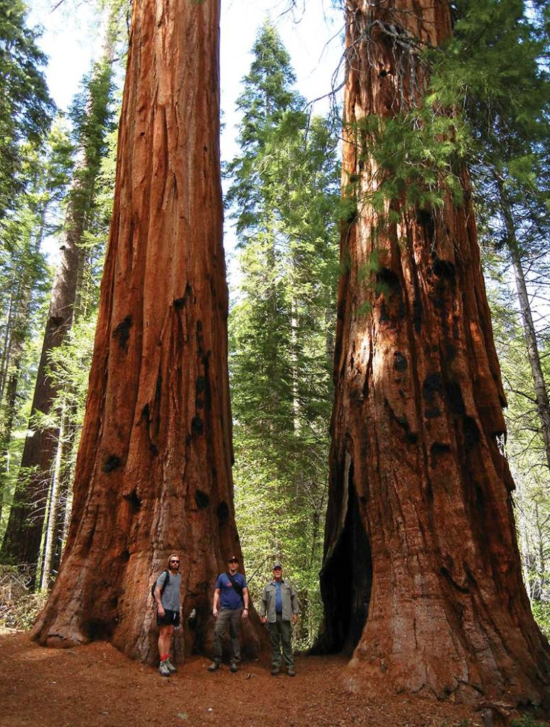 A trio of hikers stand at the base of giant sequoias in Mariopsa Grove.