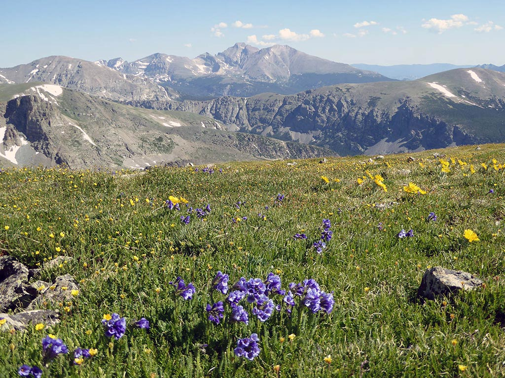 field of wildflowers with Colorado mountains in the background