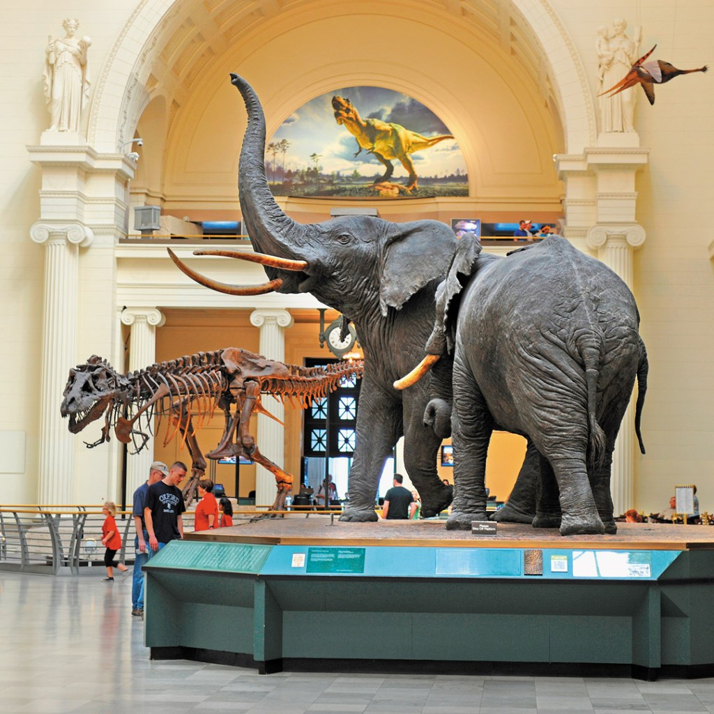 elephant display at a museum