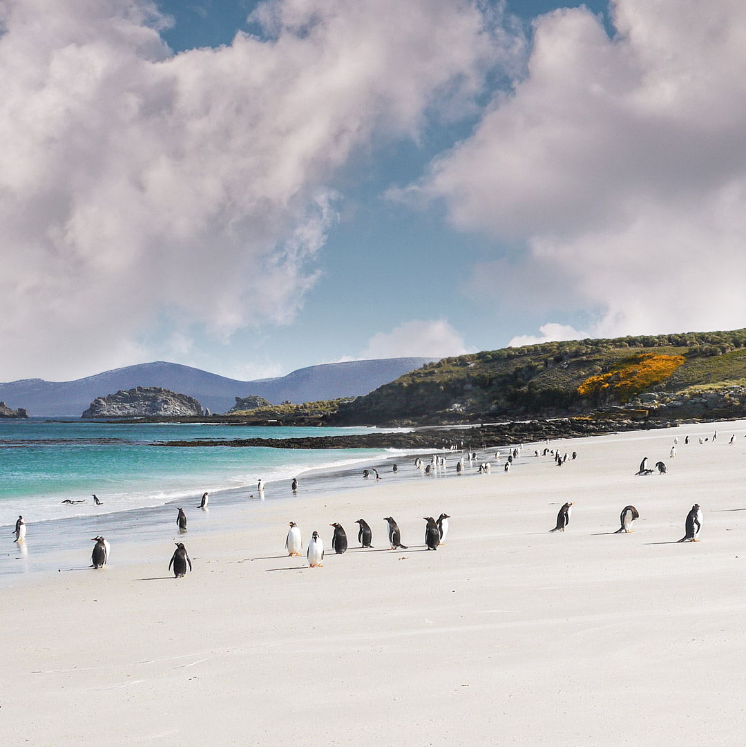penguins on the beach in the falkland islands