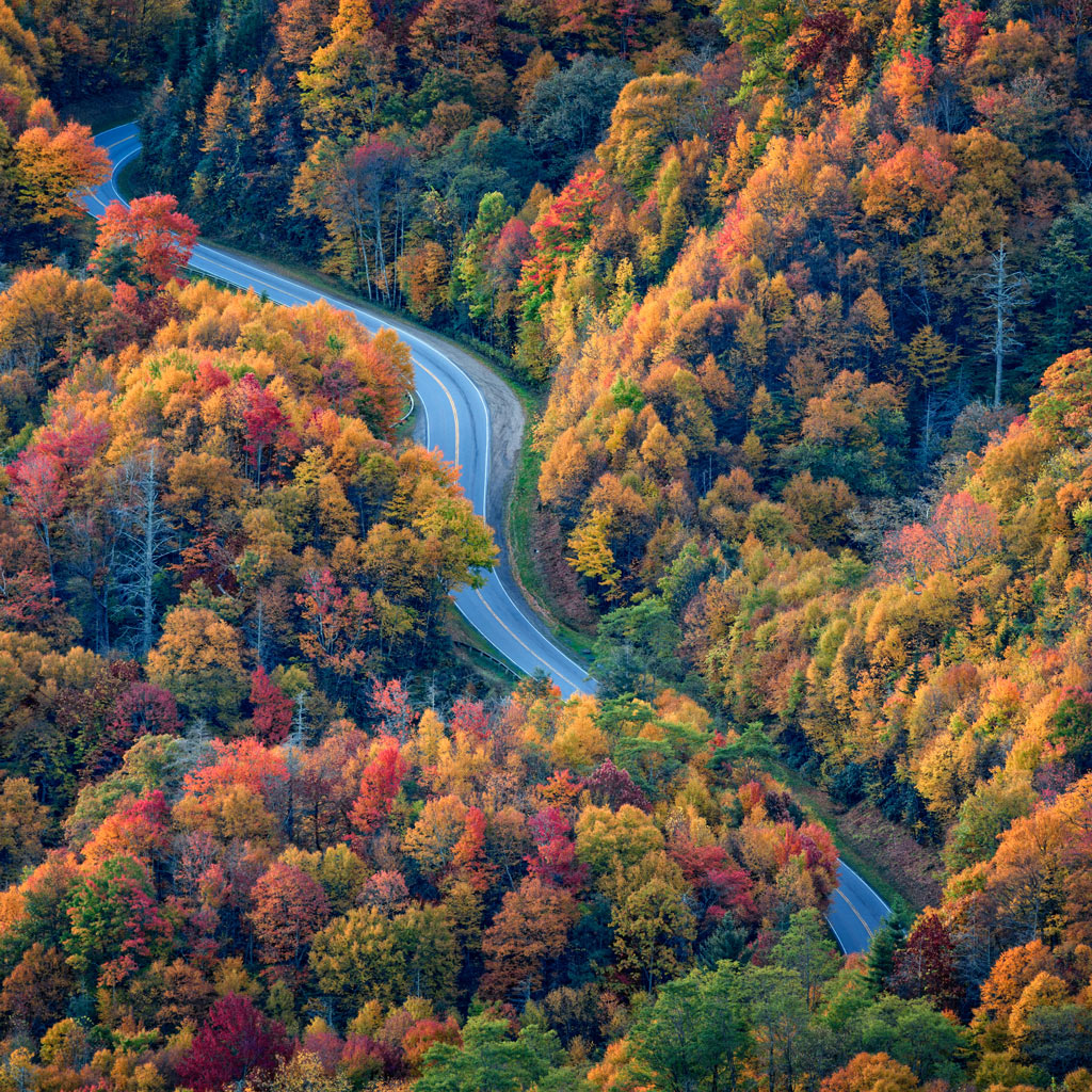 Newfound Gap Road curves through vibrantly colored trees in the fall