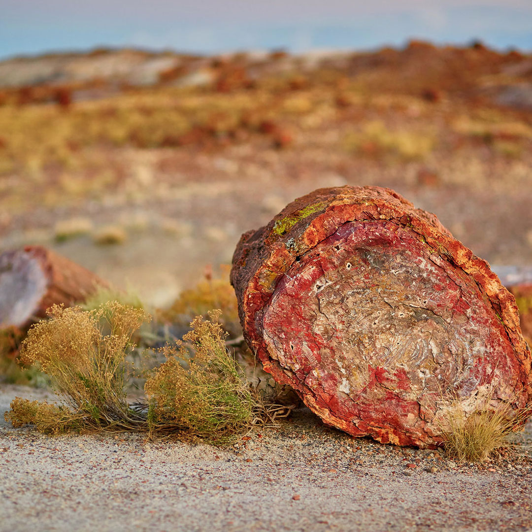 A petrified log in Petrified Forest National Park.
