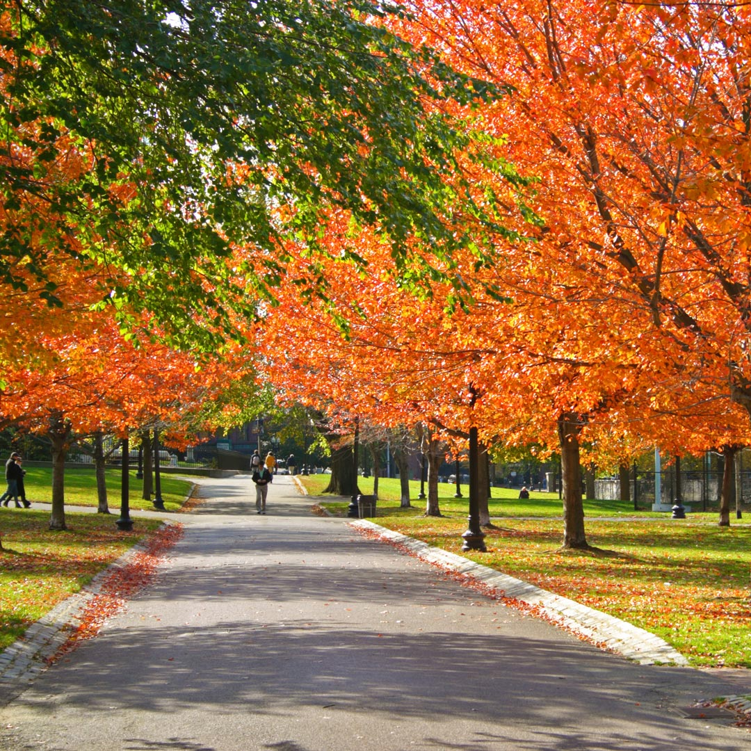 a walkway through orange and green trees in boston public garden