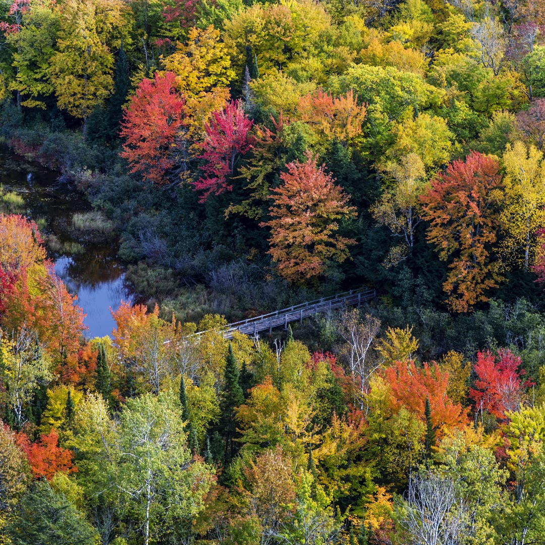 Carp River runs through forest bright with fall colors