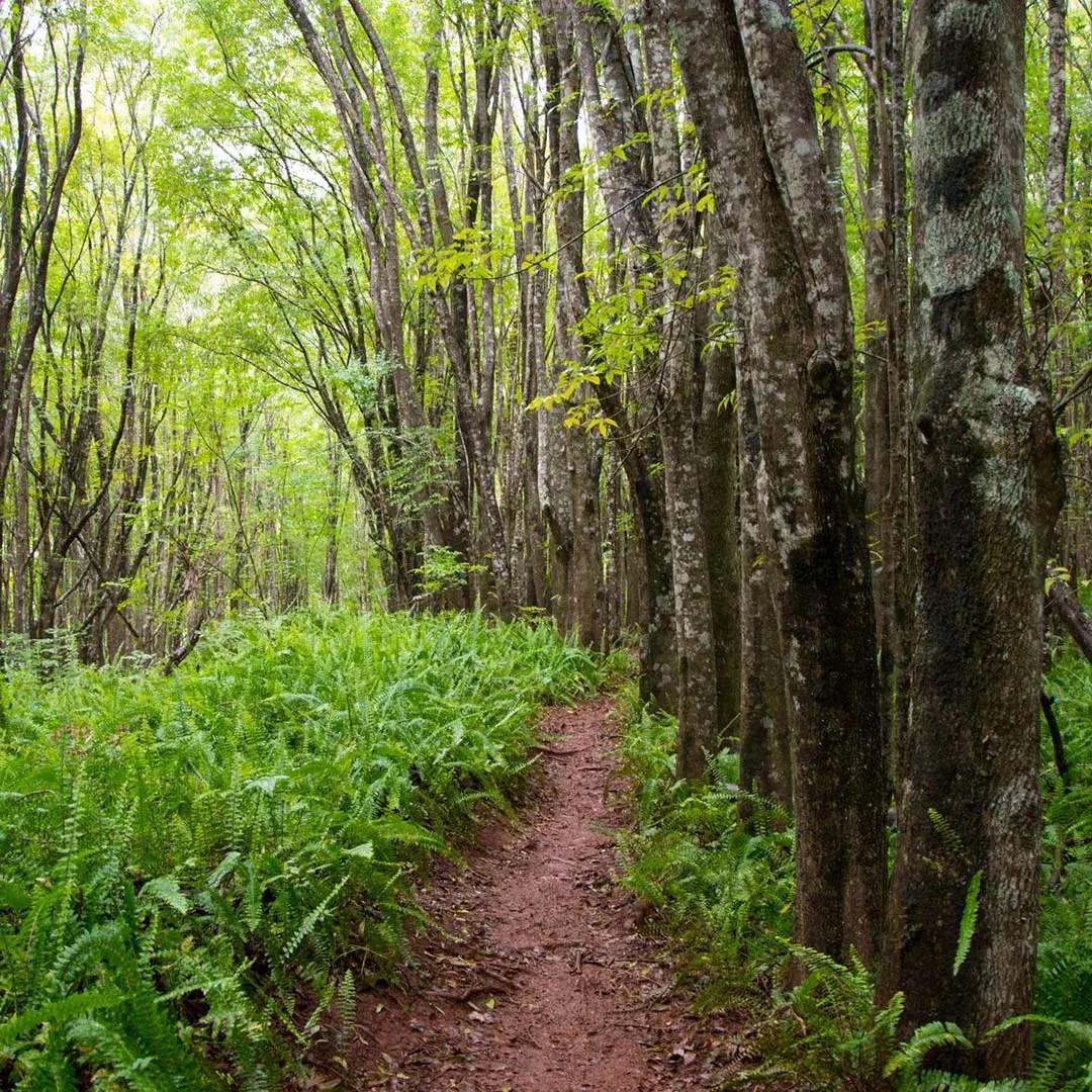 Makawao Forest Reserve on Maui. Photo © Juerg Baumann/123rf.