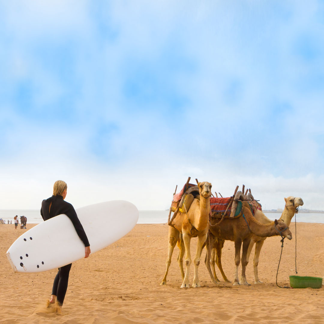 female surfer holding a surf board while looking at camels on the beach in Essaouira