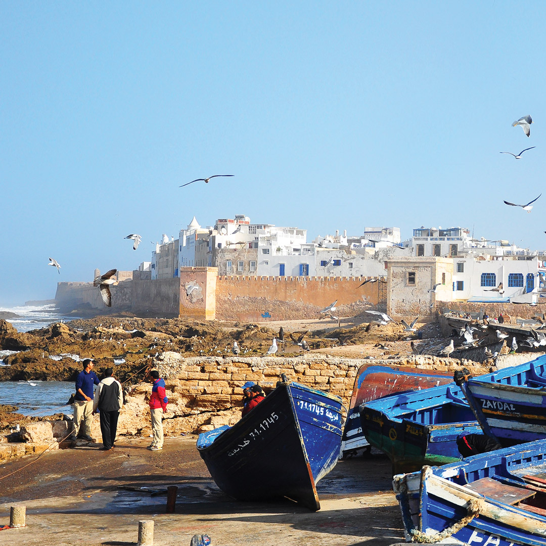 birds flying over the buildings and boats at the port in Essaouira