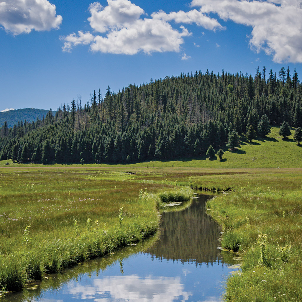 a stream leads to a mountain in Valles Caldera